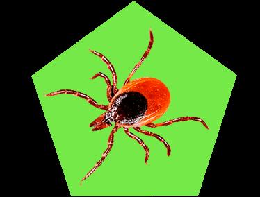 Картинка таракан