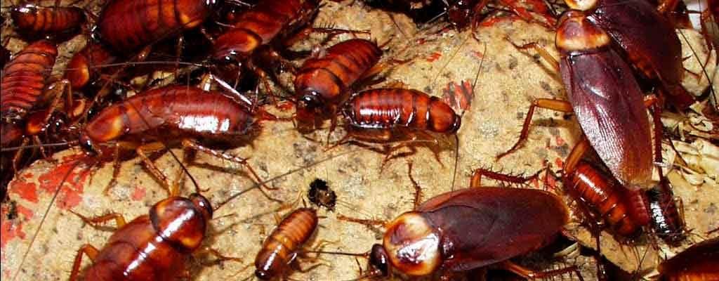 Картинка много мерзких тараканов
