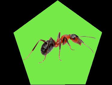 Картинка муравей